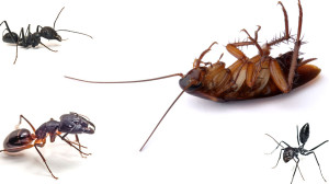 household_pests_roaches